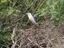 Természetfotók - madarak